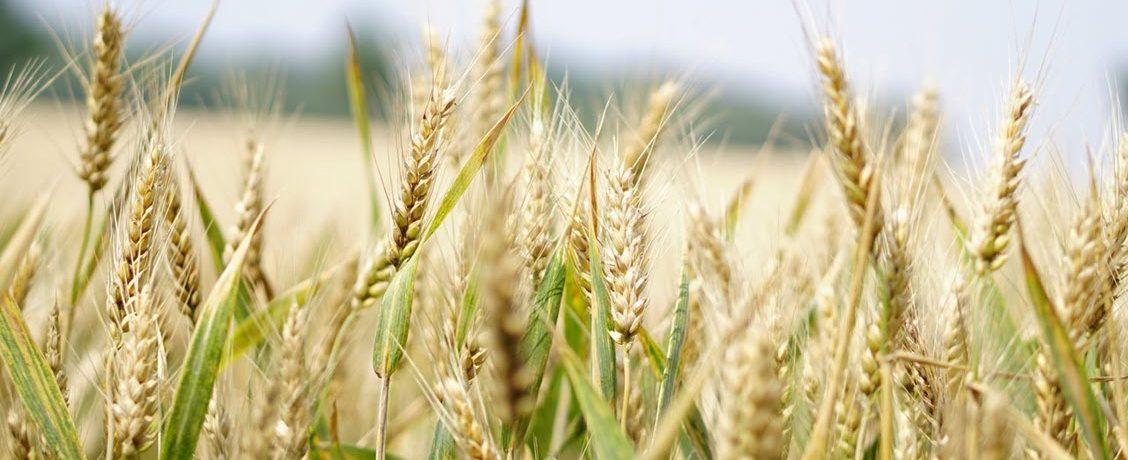 God's Harvest – October 18, 2020